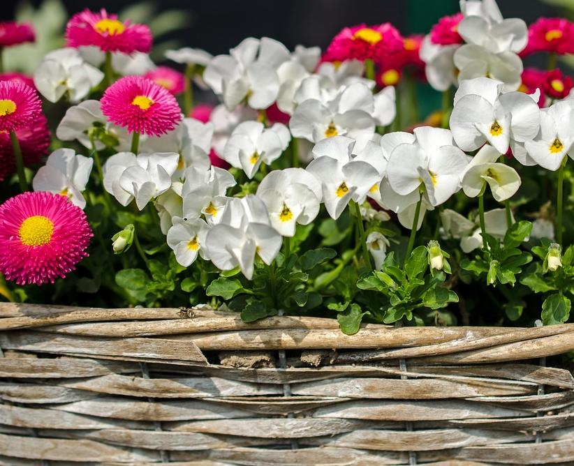 """Hortico Gartenhochbeet, das Hochbeet für jeden Garten"""""""